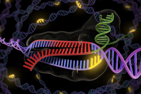 CRISPR/cas 9