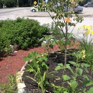 gardening-why