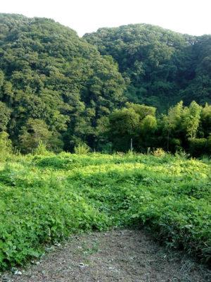 160808_kusakari03