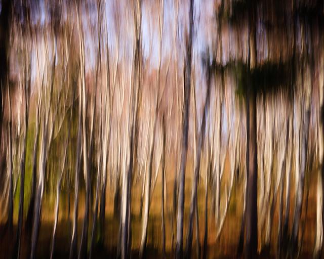 Streaky Trees II