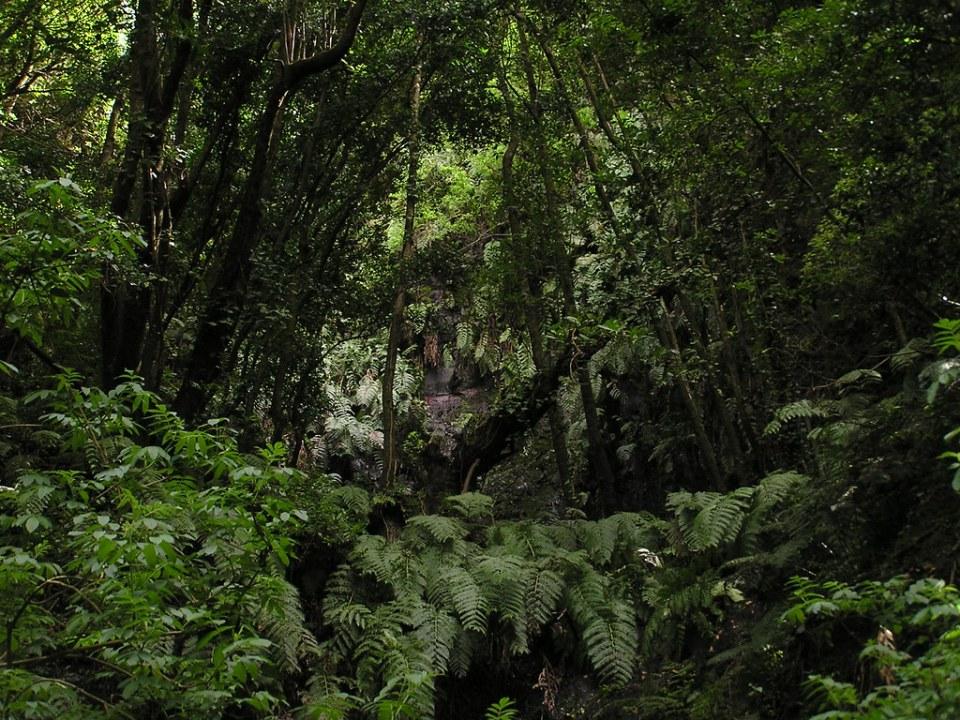 Los Tilos Isla de La Palma 172
