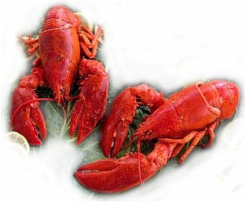 Lobsters-Two-Maine-371