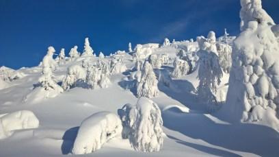 Creamy snow on the trees