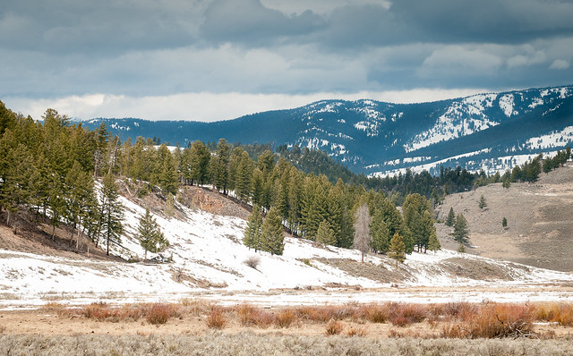 Spring in north Yellowstone