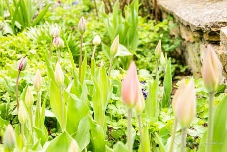 Gartenfotos