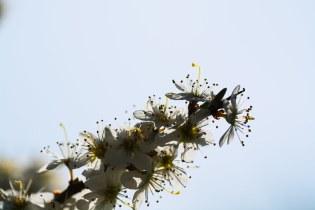 A white twig