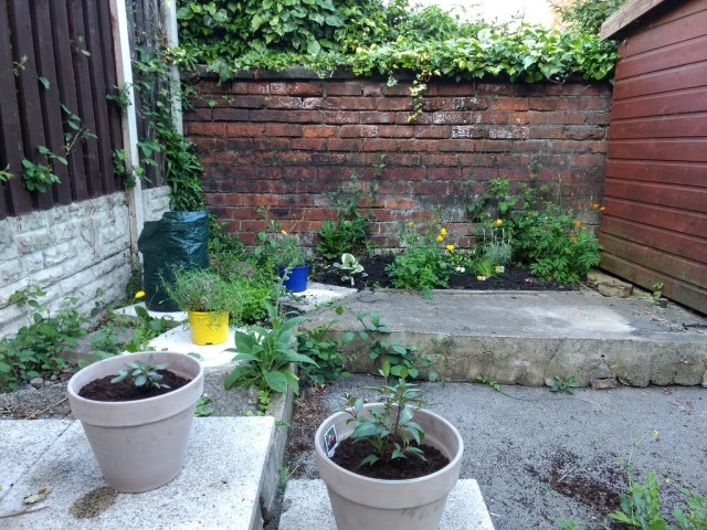 Our mudpatch and pots