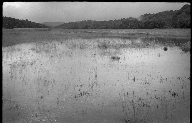 flooded pasture, overflow, French Broad River, Biltmore Estate, Asheville, North Carolina, FED 4, Industar 26, Arista.Edu 200, Ilford Ilfosol 3 developer, 6.3.18