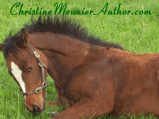 Autumn Writing Progress | ChristineMeunierAuthor.com