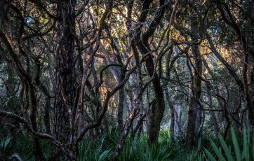Southern Maritime Forest