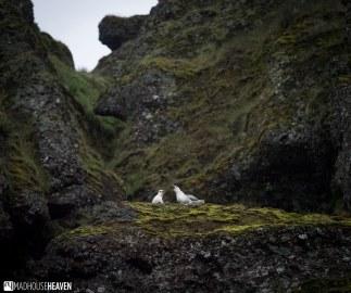 Iceland - 0849