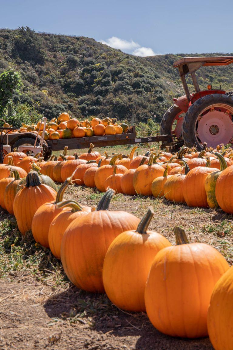 09.15. Pumpkins at R&R Farms