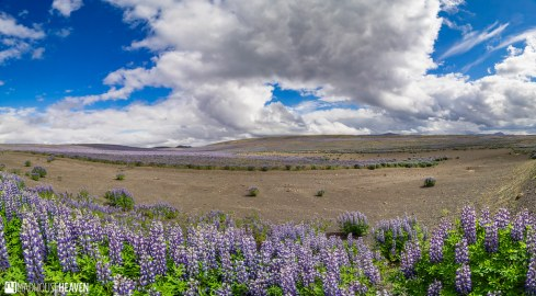 Iceland - 2081-Pano