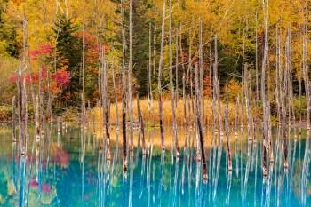 Autumn at Shirogane Blue Pond, Hokkaido, Japan