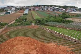 Gemüseanbau in Da Lat