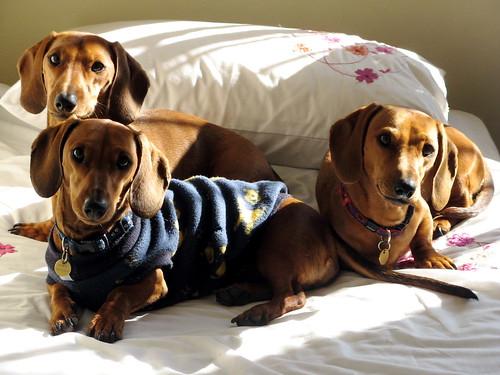 3 puppies - 1