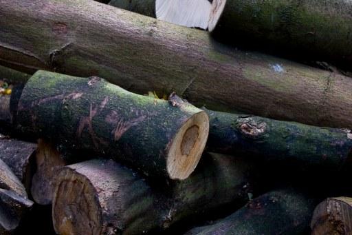 Morose Logs