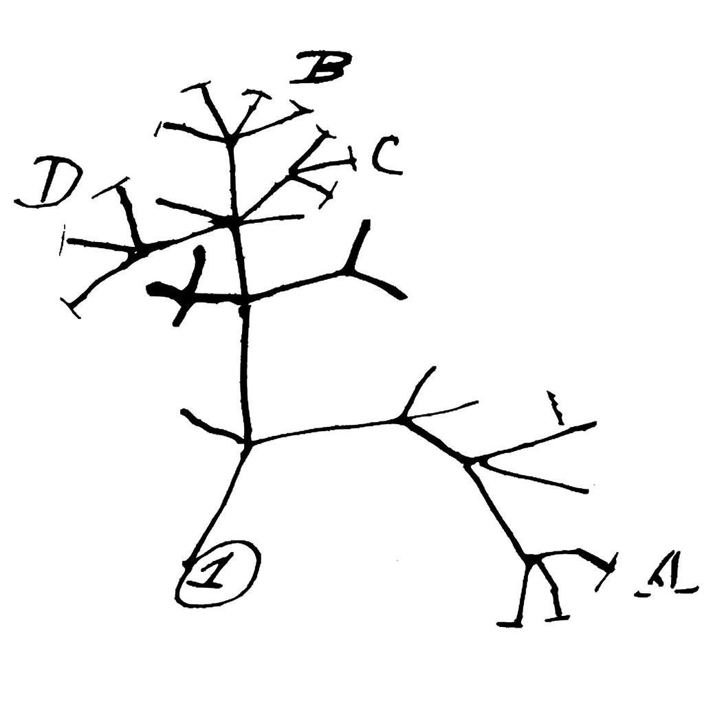 Darwin S Tree Of Life
