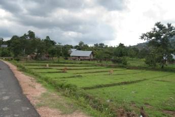 Bauernsiedlung