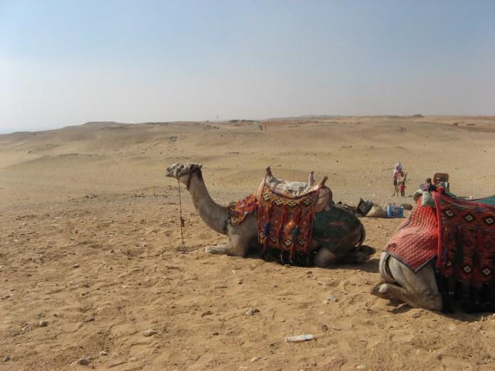 Egypt_579_吉薩騎駱駝