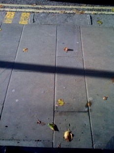 Lines & leaves