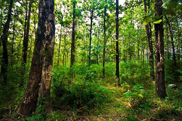 Buxa Tiger Reserve