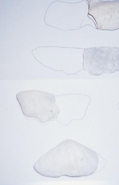 Analyzing Worn Tridacna Pieces