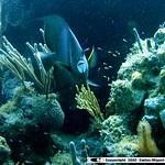 Reeffish vol1.01 (23)