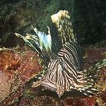 Culebra Reef Fish