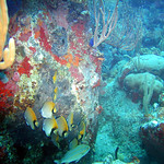 Reeffish vol1.01 (44)