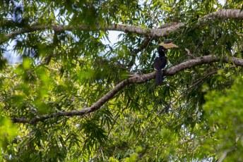 en een malabar pied hornbill krijg je niet vaak te zien