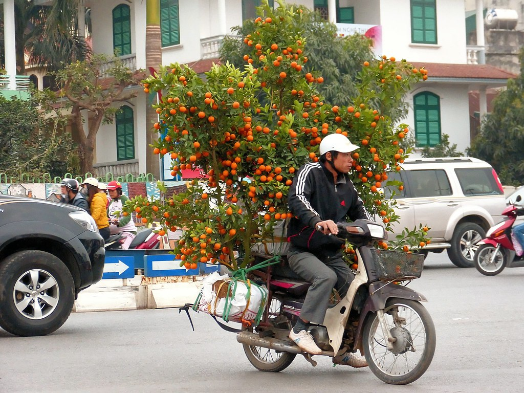 Hanoi . Orange grove on wheels