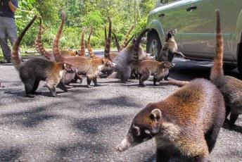 Onderweg even de raccoon's voeren.