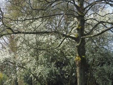 Noorder Park - Amsterdam (6)