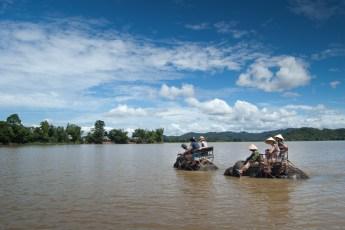 Elephanten queeren den Lak See