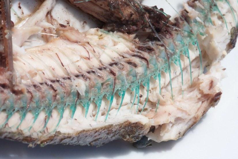 garfish bone