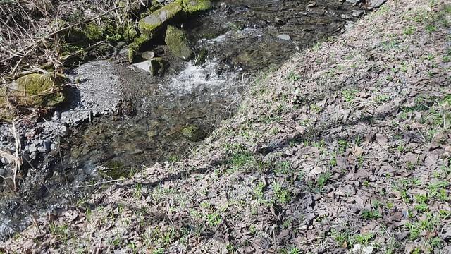 Frühlingsspaziergang im Röthengrund