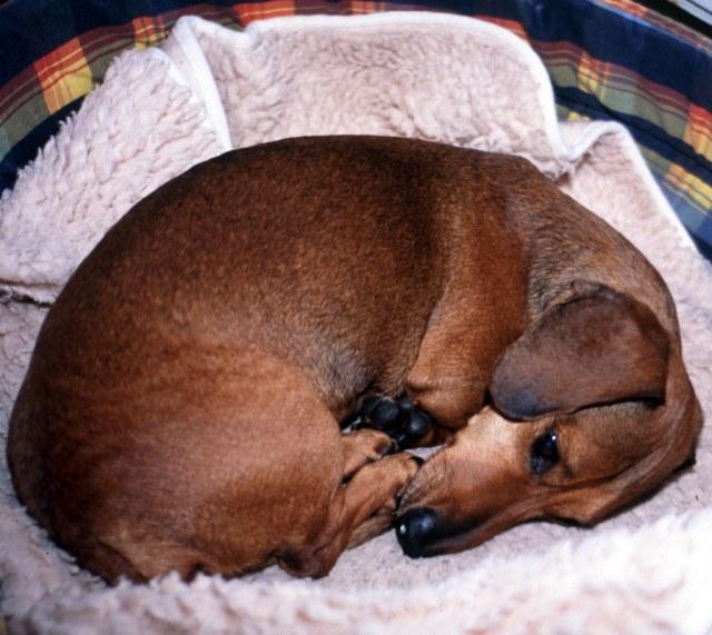 when to euthanize a dog with arthritis