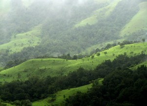 Kudremukh, Shola Grasslands.