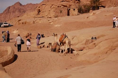 Camel Trail DSC_0670