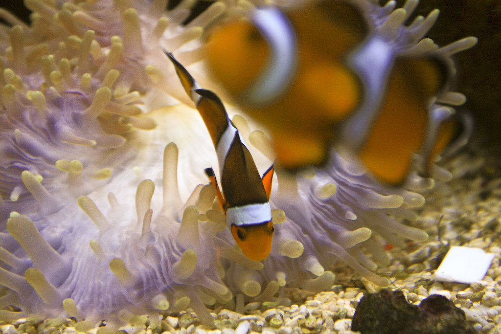 A visit to The Underwater World Langkawi is one of the best things to do in Langkawi