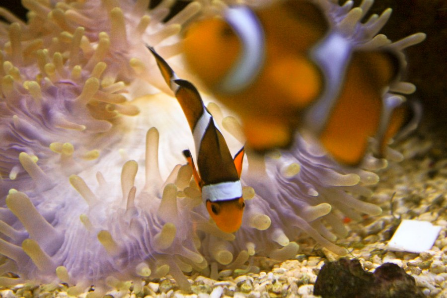 A visit to The Underwater World Langkawi is one of the best things to do in Langkawi, Malaysia