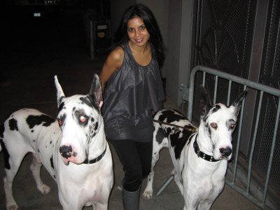hitha with lady gaga s dogs i got the huge honor of walki flickr