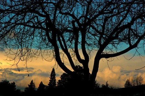 Los Altos Story Tree, California, USA