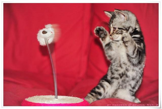 猫咪跆拳道_Xiao Mei Practising Taekwondo