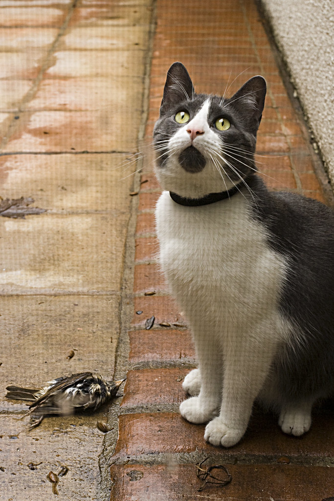 Hey A Dead Bird Buddy Didn T Kill It I M Pretty