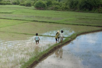 Kinder im Reisfeld