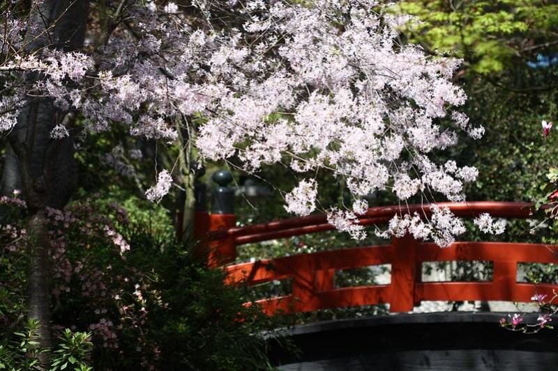Japanase Garden Bridge