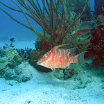 Reeffish vol1.01 (37)