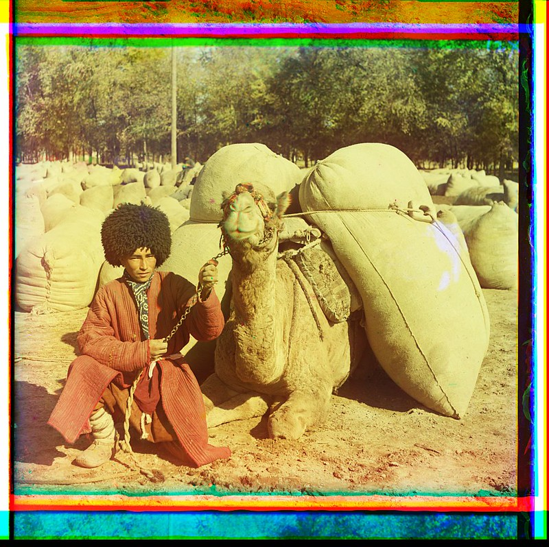 [Man with camel loaded with packs] (LOC)
